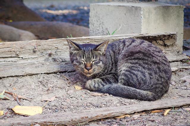 Today's Cat@2014-10-05