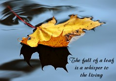 The Fall of a Leaf is a Whisper to the Living (Karen_Chappell) Tags: blue autumn macro reflection nature water yellow newfoundland one leaf pond quote floating stjohns float nfld afloat bowringpark canonef100mmf28usmmacro