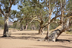 Simpsons Gap (pgcrofty) Tags: park red west river gum bed ghost national ranges northern territory simpsonsgap macdonnell nttrrip2014