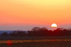 _MG_3620 Solnedgang, Pulken-Skne (Thanks for visit Soes' photo from the lovely natur) Tags: sol nature skne sundown natur himmel views 300views 100 skyer solnedgang mne autofocus fantasticnature udsigter pulken solveigsterschrder