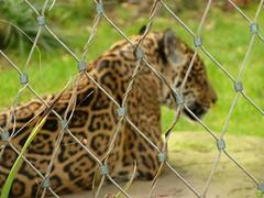 HFF? (petrOlly) Tags: nature animal animals fence germany deutschland zoo europa europe natura krefeld friday wildanimals przyroda hff zookrefeld fencedfriday happyfencedfriday