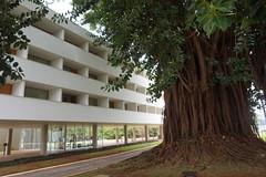 Braslia Palace Hotel! (ANNE LOTTE) Tags: tree braslia garden hotel jardim arvore bauwerk garten baum gebude
