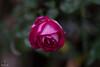 IMG_6601-1 (Josef17) Tags: 50mm blende14