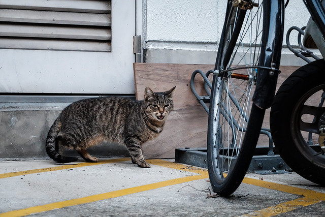 Today's Cat@2014-10-17