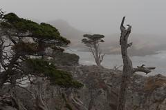 Carmel2014-191 (ExarchIzain) Tags: monterey bigsur carmel pt lobos pointlobos