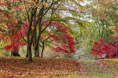 The bench (A Crowe Photography) Tags: autumn red nature leaves weather 50mm nationaltrust fallenleaves northwales bodnantgarden welshlandscape welshflickrcymru bbcwalesnature welshphotographer welshphotography northwalesdailypost