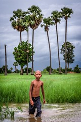 The Wet Walk Home (Trent's Pics) Tags: green kids palms cambodia flood palmtrees fields farmer ricefields fieldworker kampongchnnang