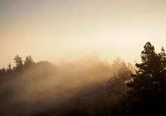 berg sunrise germany deutschland nebel sachsen wald sonnenaufgang hang sächsischeschweiz gohrisch papststein