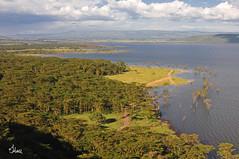 Lake Nakuru - 8215b+ (jenonsafari) Tags: lake landscape photography nikon kenya wildlife safari nakuru kenyasafari africansafari lakenakuru landscapephotography africasafari wildlifephotography kenyaafrica yellowfevertree africalandscape flamingohill kenyalandscape jenniferhall jenhall flamingohillcamp jenhallphotography jenhallwildlifephotography dkgrandsafaris kenyaphotography