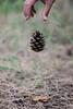gravità d'autunno (tulipano_mari) Tags: autumn foglie automne canon 50mm shot picture gravity autunno etna montagna catania pigna cadere bosco gravité gravità forzadigravità