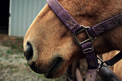 day at the stables (h.anderle) Tags: horses horse beautiful animal animals closeup barn nose mare notice farm details majestic equestrian horseback stables foal throughmyeyes horsephotography dayonthefarm