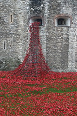 The Poppies Pour Forth (raggi di sole) Tags: red england green london art ceramic historic worldwari poppies toweroflondon thetower commemoration towerpoppies
