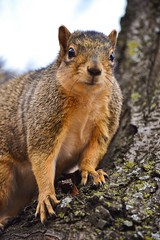 image (Eva O'Brien) Tags: chicago bird fall nature birds squirrel squirrels ukrainianvillage pigeon wildlife pigeons neighborhood urbannature squirrelly d3100 nikond3100 evacares evaobrien