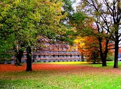 Kunst in der Natur: der Rasen leuchtet grn, rot und gelb-das Gelb stammt von Gingkoblttern (evioletta) Tags: hannover park herbst bltter bume gelb rot grn