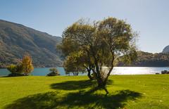 Segnali d'Autunno (lorenzapanizza) Tags: magicoautunno autunno lagodimolveno tree shadow sunset lago italia italy landscapephotography