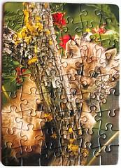 Junger Puma (Leonisha) Tags: puzzle jigsawpuzzle puma cougar