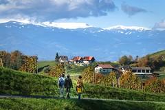 Autumn walk (www.textbox.at) Tags: sdsteiermark steiermark austria styria weinberge berge schnee