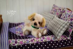 kiki02 (Zhanna Zolotina) Tags: miniature dog ooak teddy bear handmade tinydolhousetoyzz toyzz altair momoko blythe dollhouse puppenhaus