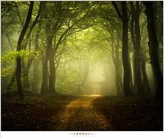 Through the magical forest (nandOOnline) Tags: autumn path natuur fall magical nikon speuld speulderbos ochtend green autum leaves light mist fog nevel forest faeries solse gat trees beuk beukenbomen bomen bos d500 herfst landschap