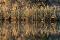 20160825_ZambeziReflectionsLandscapes_MCM-4 (mcmessner) Tags: abstract africa bjadventures morning morningboatride reflection rorschak southafrica2016 sunrise tongabezilodge water zambeziriver zambia livinstone