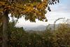 2016-11-01_DSC_4045_web (joerg.z) Tags: baum bã¤umeundstrã¤ucher de deu deutschland diewelt europa fotografie genre germany herbst hessen homberg jahreszeiten landschaft landschaftsbild landschaftsfoto landschaftsfotografie naturlandschaft nebel pflanze umwelt wetter witterung theworld