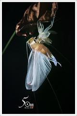reborn (fiftymm-macro) Tags: macro insects fiftymm99 nikon katydid