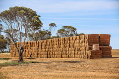 haystack near sea lake (robertmilesdesign) Tags: australia australianlandscape themallee