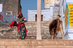 @Pushkar Lake (ayashok photography) Tags: rangderajasthan nikon ayashok ayashokphotography nikond300 nikond700 nikkor24120mmvr rajasthan pushkar camelfair camels market india rajastan rajasthani pushkarlake ayp9837