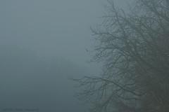 Pensive Autumn (Natali Antonovich) Tags: parallels tervuren belgium belgie belgique sun mist nature landscape tree mysticalatmosphere mysteriousness mystery mysteri pensiveautumn autumn