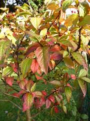 Autumn Colours 1 (chrisinwales) Tags: autumn wales leaves ceredigion autumncolours colours