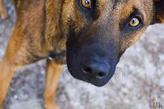 Miradas (Tato Avila) Tags: colombia boyac perro dog bigotes animal vida colores clido hocico miradas lagunadetota