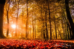 Autumn (tione76) Tags: landscape paysage nikon d5300 tione76 automne autumn foret forest wood colors sun soleil orange red rouge bois rayons rays france normandie normandy