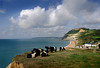 Grazing with a view (Ken Came) Tags: dorset september goldencap sea water cattle nikon d7000 kencame cliffs cow cows beltedgalloway cliff shore clouds