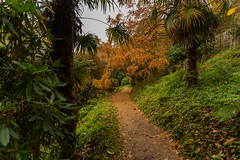 Autumnal Garden (trevorhicks) Tags: cotehele house national trust garden autumn path tamron canon 6d tree leaves