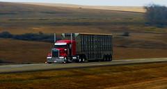 Wiebe (jr-transport) Tags: kenwo kenworth w900 w900l cattle hauler cattlepot
