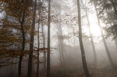20161030-WOL_7715.jpg (viennalinux) Tags: spaziergang nebel herbst nature tauern fog natur ossiach ossiacher