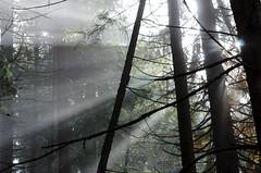 20161030-WOL_7727.jpg (viennalinux) Tags: spaziergang nebel herbst nature tauern fog natur ossiach ossiacher