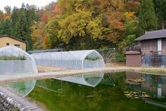 Tomato greenhouses (Frank Fujimoto) Tags: ogimachi japan water reflection