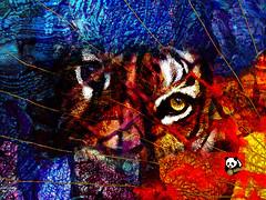 Tiger (mfuata) Tags: tiger animal doga güç pover tutsak capture desperate