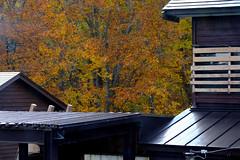 (ansel.ma) Tags:    northeastern japan aomori fujifilmxt1 fujifilmxf55200mmf3548ois