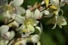 _MG_7834 (zet11) Tags: storczyki bali para młodych banan kwiat