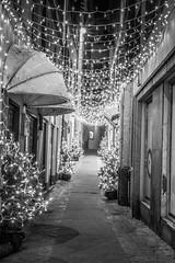Street Christmas