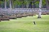 Companion (Antropoturista) Tags: belgium lommel magpie crosses cemetery german soldiers