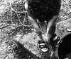 Brincando no quintal (danielc_rc) Tags: flilho brincadeira arlivre menino infancia agua pretoebranco euamopretoebranco noscreens