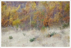 The edge of the plantation (ggcreativeimages) Tags: autumnleavestrees landscapeuk