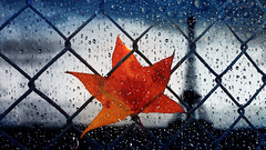 Autumn in Paris (VIProduction) Tags: art europe euro eiffel eiffeltower travel traveling tower iloveparis inspiring outdoors orange photography paris photographer prayforparis parisfrance pointofview parisstreets graphic france french flickr canon canon6d visual view vacation bonjour blue leaf leaves autumn autumnleaves gate gates fence graphicdesign photoshop