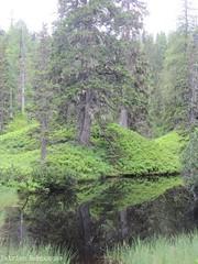 Mysterious forest (katrienberckmoes) Tags: rauris urwald valley austria landscape pine trees lake mysterious alps
