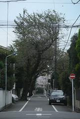 tokyo6104 (tanayan) Tags: urban town cityscape tokyo japan nikon j1   road street alley akabane