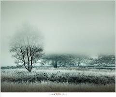 Layers of mist (nandOOnline) Tags: mist morning strabrecht koud sunrise december nature nevel landscape vorst zonsopkomst dauw natuur strabrechtseheide cold fog ochtend landschap frost heeze nbrabant nederland
