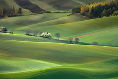 Verdi colline (Zz manipulation) Tags: art ambrosioni zzmanipulation verde colline toscaba campagna country natura erba campi